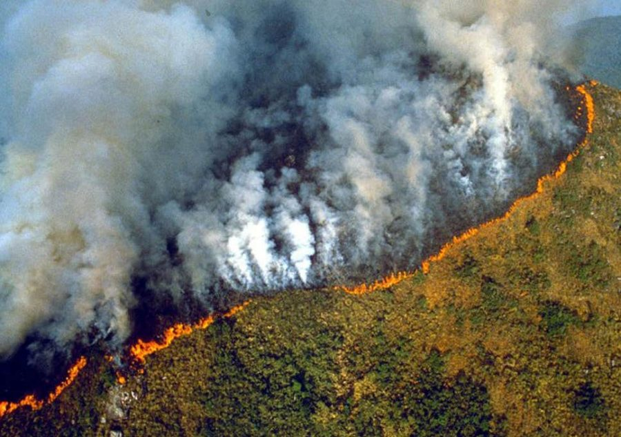 With an increase in clearing for cattle and an intense dry season, the Amazon Rainforest's fires continue to fester.