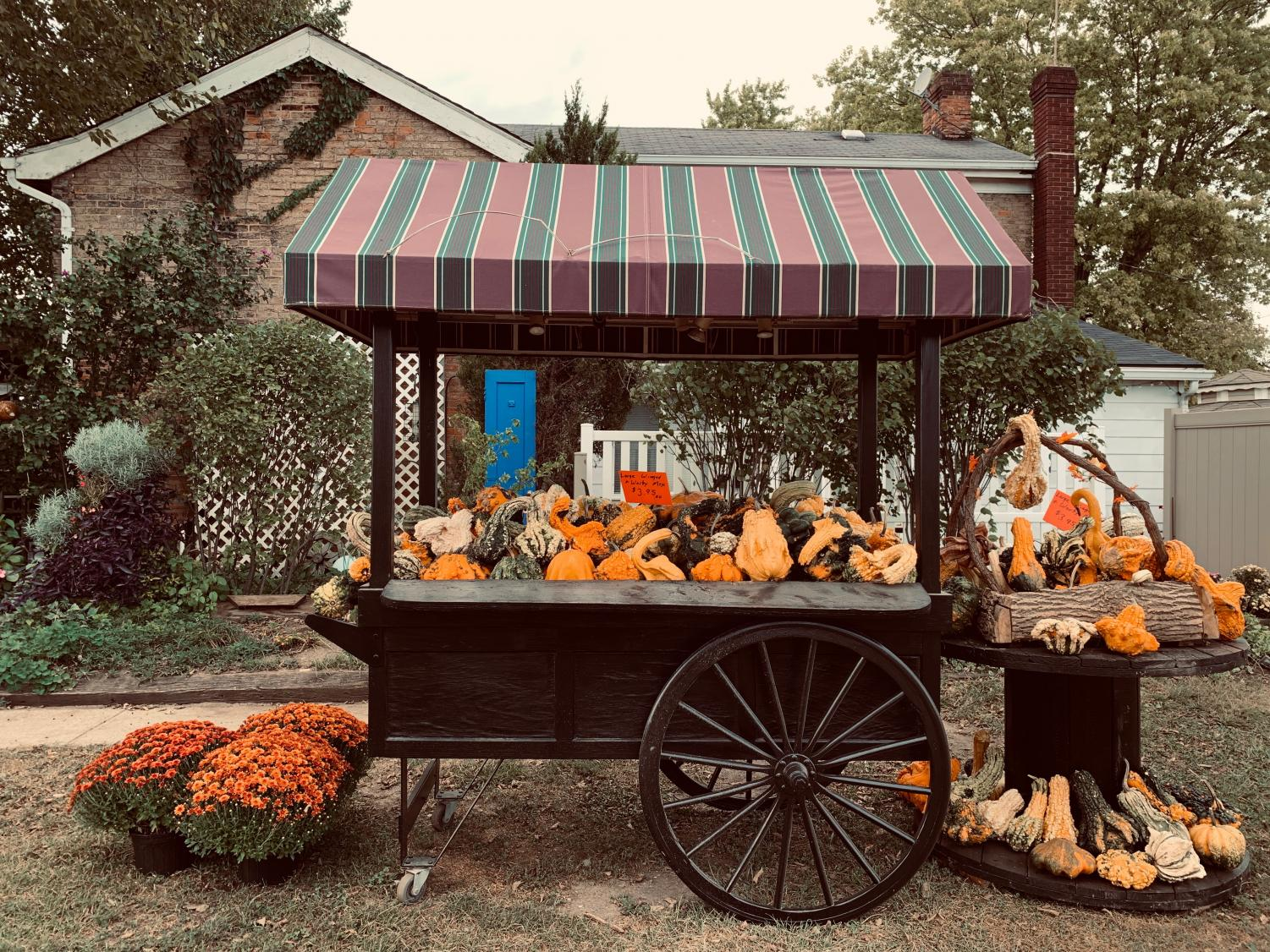 A festive display of gourds set up at Brown's Family Farm Market.